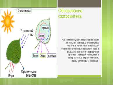 Образование фотосинтеза Растение получает энергию и питание не только с помощ...