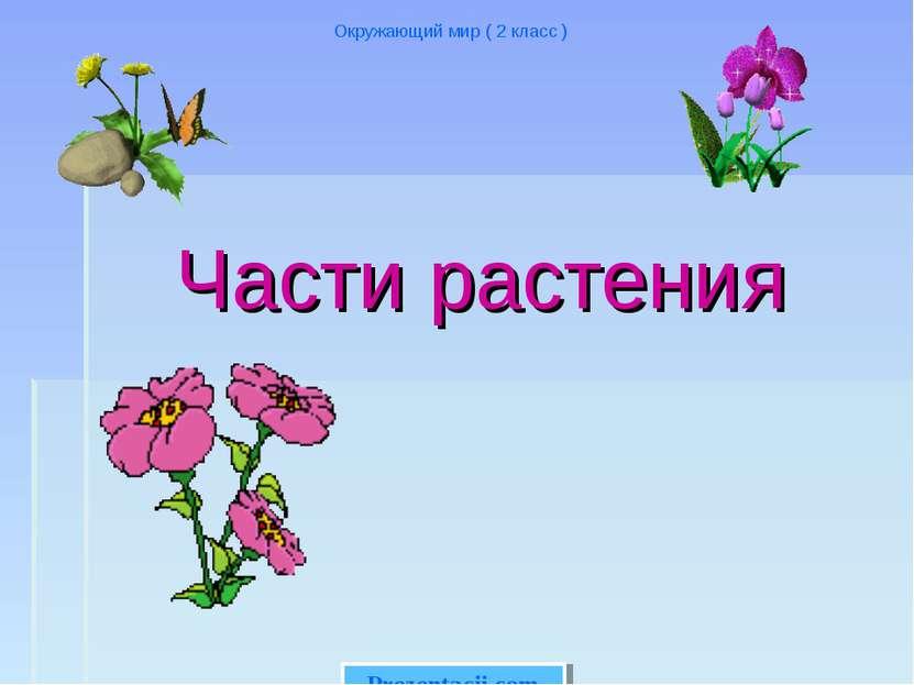Части растения Окружающий мир ( 2 класс ) Prezentacii.com