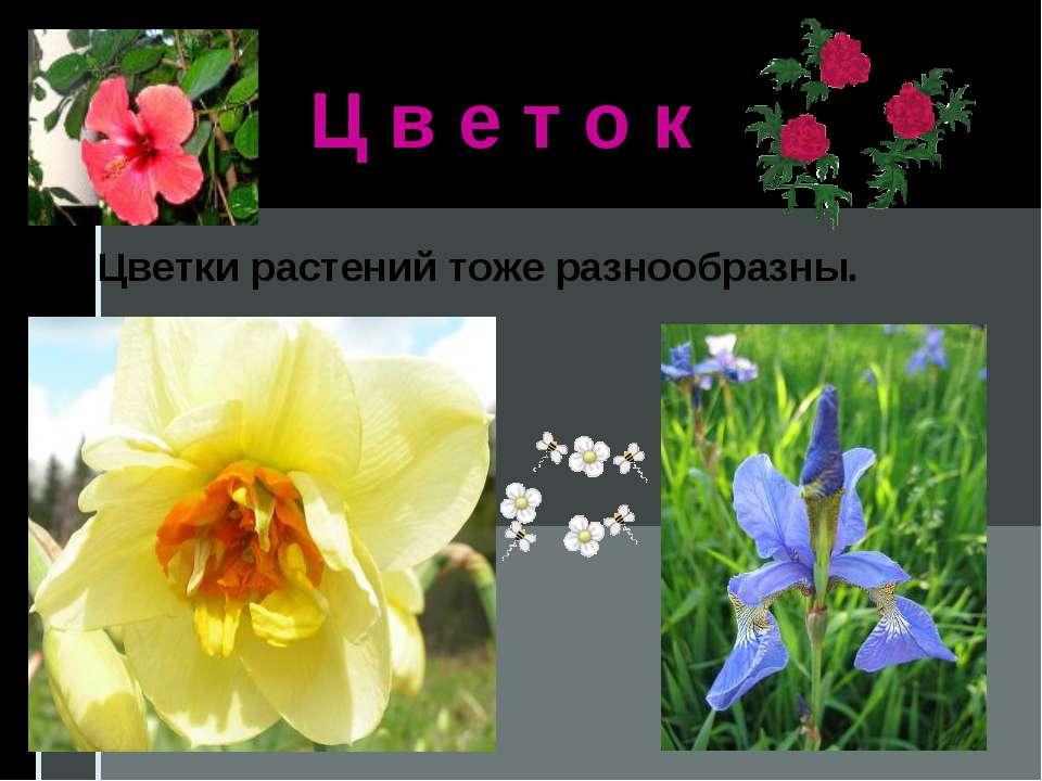 Ц в е т о к Цветки растений тоже разнообразны.