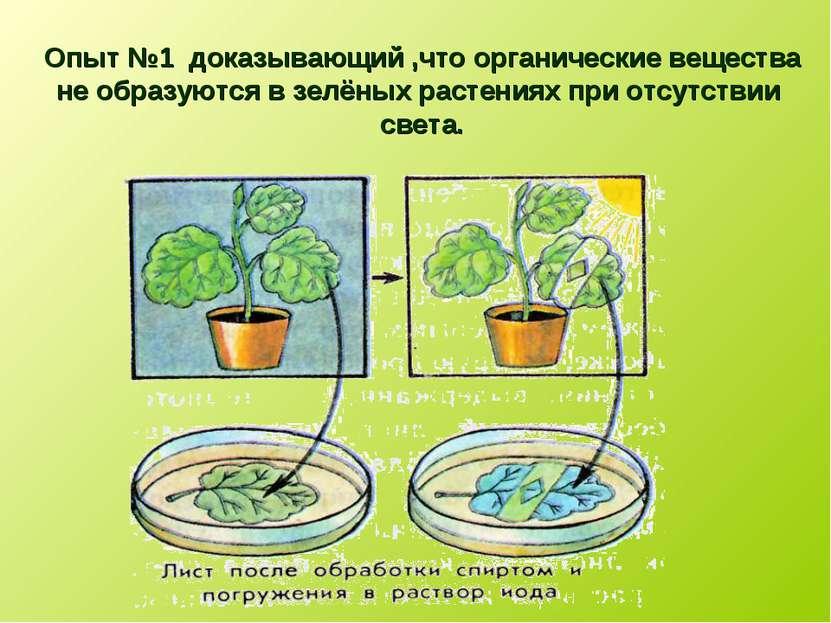 Опыт №1 доказывающий ,что органические вещества не образуются в зелёных расте...