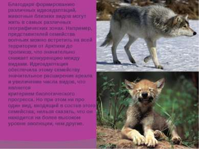 Благодаря формированию различных идиоадаптаций, животные близких видов могут ...