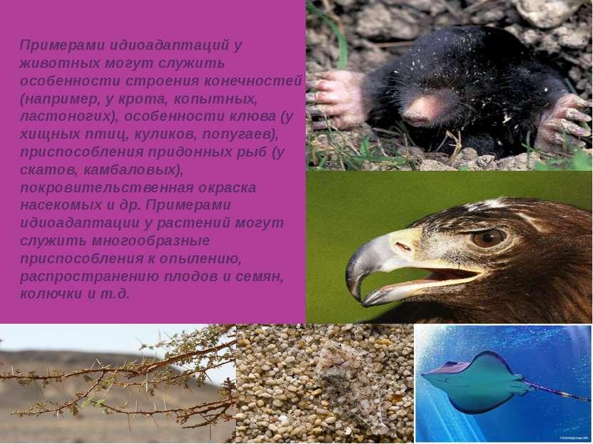 Примерами идиоадаптаций у животных могут служить особенности строения конечно...