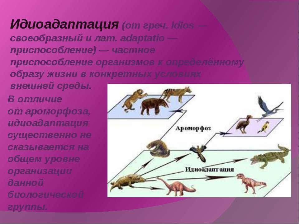Идиоадаптация(от греч. idios — своеобразный и лат. adaptatio — приспособлени...