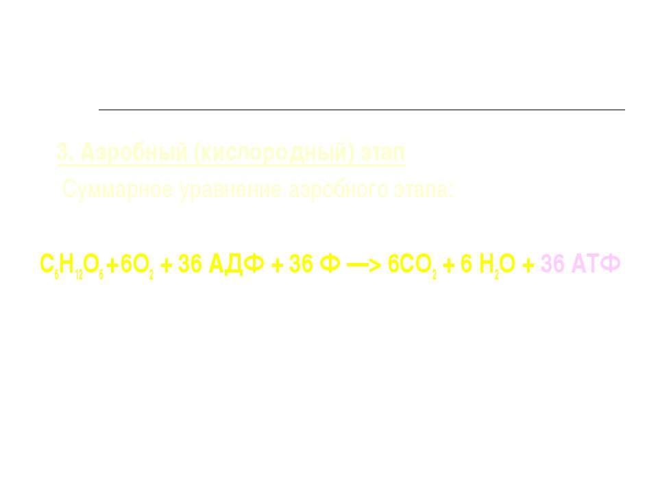 3. Аэробный (кислородный) этап Суммарное уравнение аэробного этапа: С6Н12О6 +...