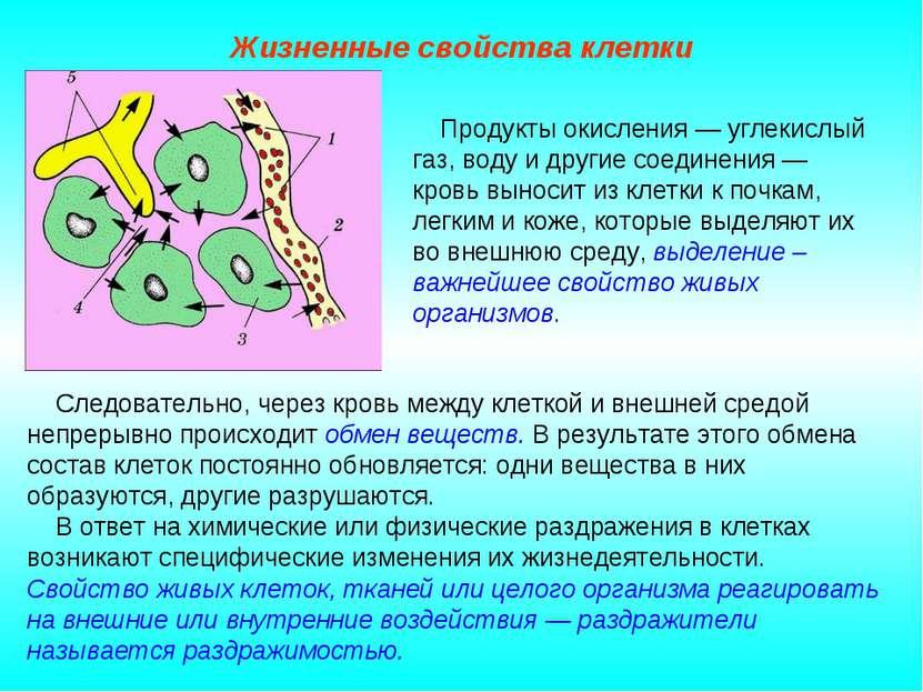 Жизненные свойства клетки Следовательно, через кровь между клеткой и внешней ...