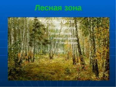 Лесная зона Лесная зона самая широкая в умеренном тепловом поясе.