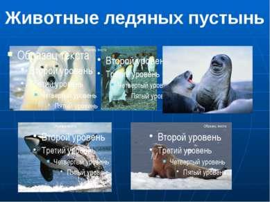 Животные ледяных пустынь 1.Белый медведь 2.Императорский пингвин 3.Тюлени. 4....