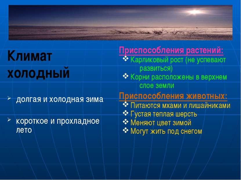 Климат холодный долгая и холодная зима короткое и прохладное лето Приспособле...