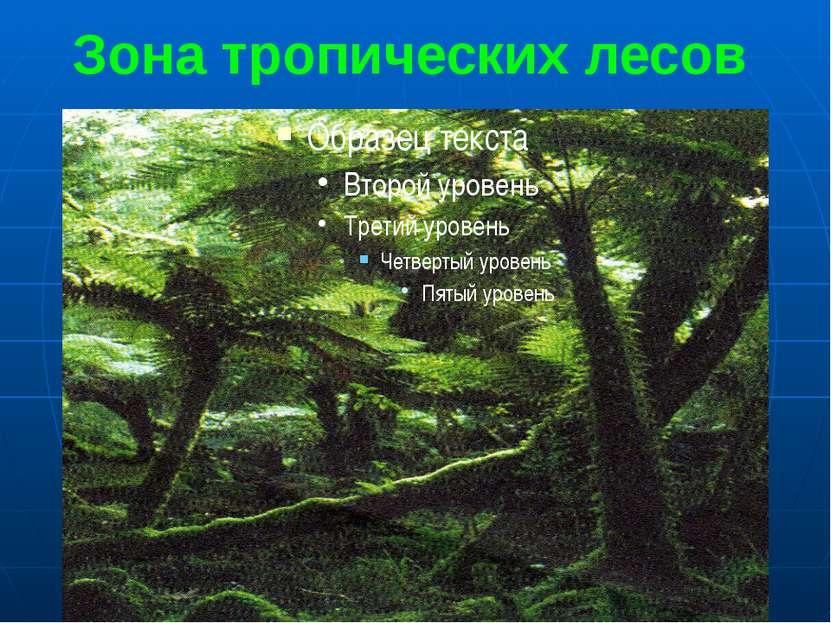 Зона тропических лесов Чем ближе к экватору, тем короче сухой период года. Та...