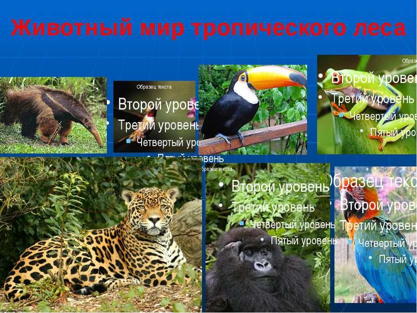 Животный мир тропического леса Муравьед 2. Колибри 3. Тукан 4. Древесная лягу...