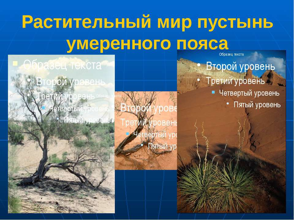 Растительный мир пустынь умеренного пояса 1.Саксаул 2.Верблюжья колючка 3.Сук...