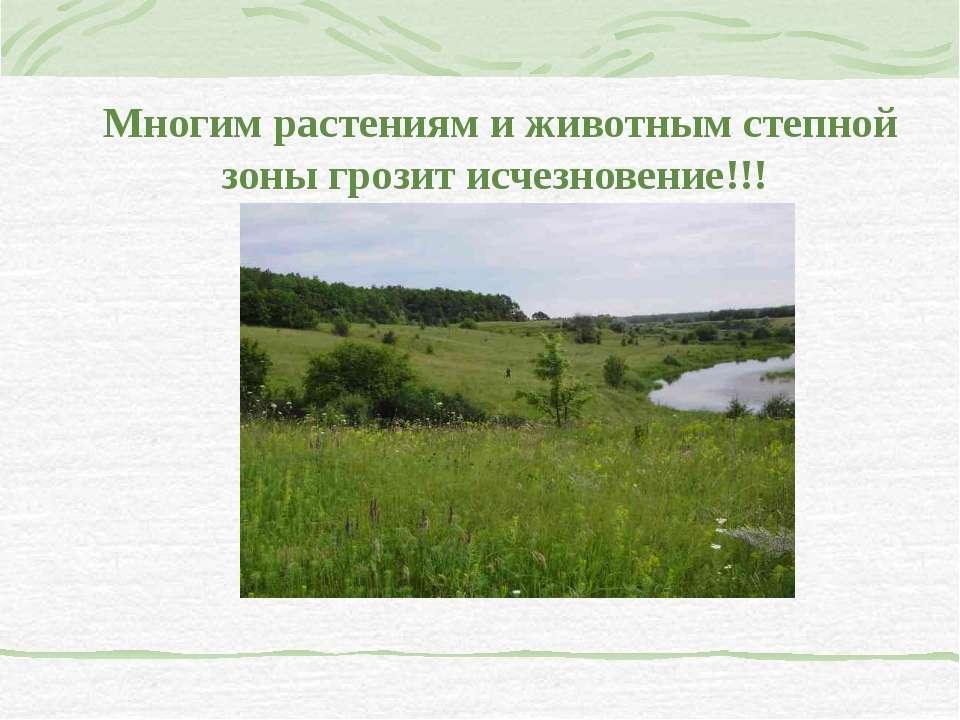 Многим растениям и животным степной зоны грозит исчезновение!!!