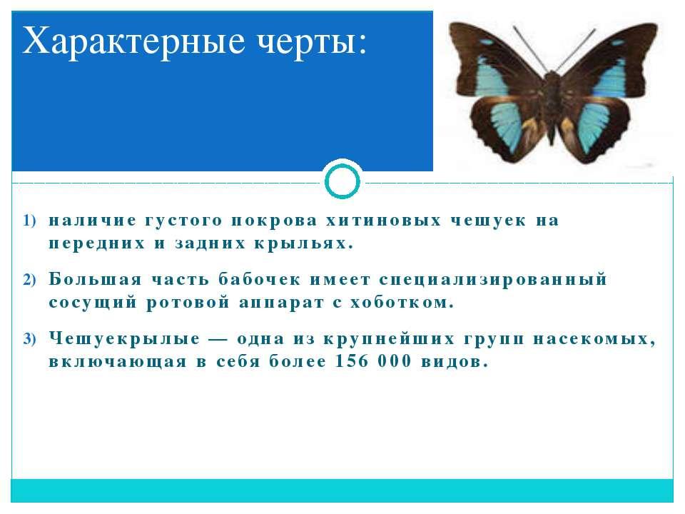наличие густого покрова хитиновых чешуек на передних и задних крыльях. Больша...