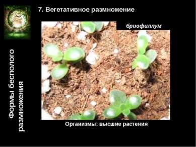 Формы бесполого размножения 7. Вегетативное размножение Организмы: высшие рас...