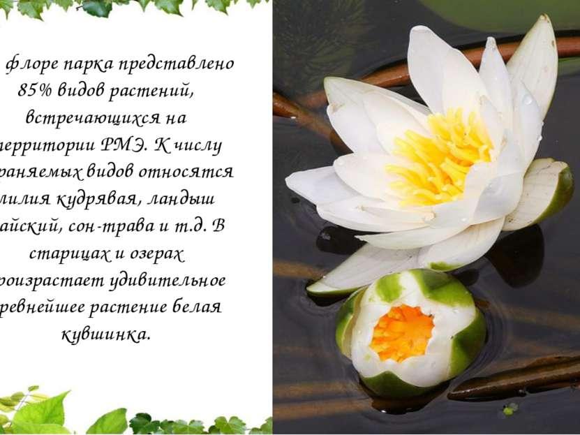 Во флоре парка представлено 85% видов растений, встречающихся на территории Р...