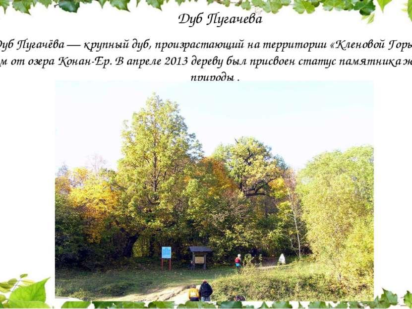 Дуб Пугачева Дуб Пугачёва — крупный дуб, произрастающий на территории «Клено...
