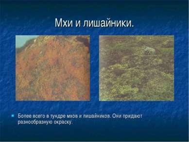 Мхи и лишайники. Более всего в тундре мхов и лишайников. Они придают разнообр...