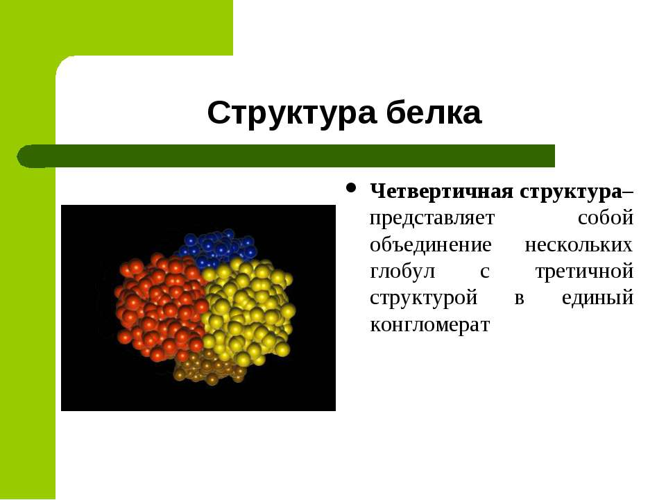 Структура белка Четвертичная структура– представляет собой объединение нескол...