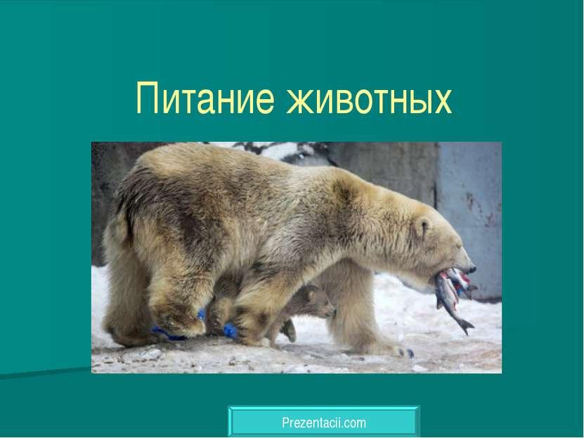 Питание животных Prezentacii.com