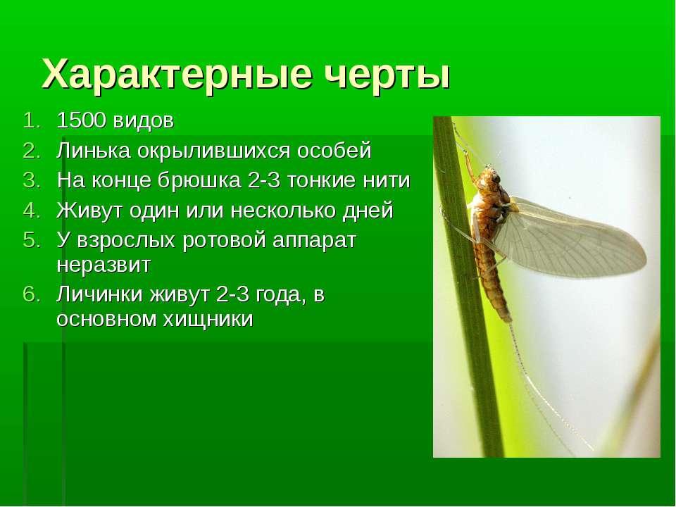 Характерные черты 1500 видов Линькаокрылившихсяособей На конце брюшка 2-3 т...