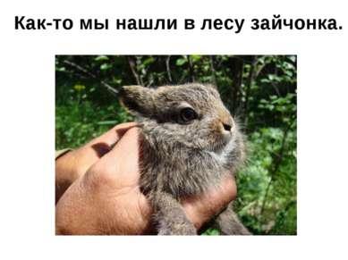 Как-то мы нашли в лесу зайчонка.