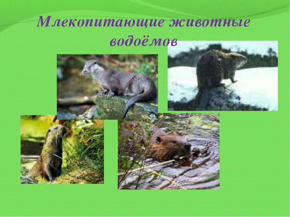 Млекопитающие животные водоёмов
