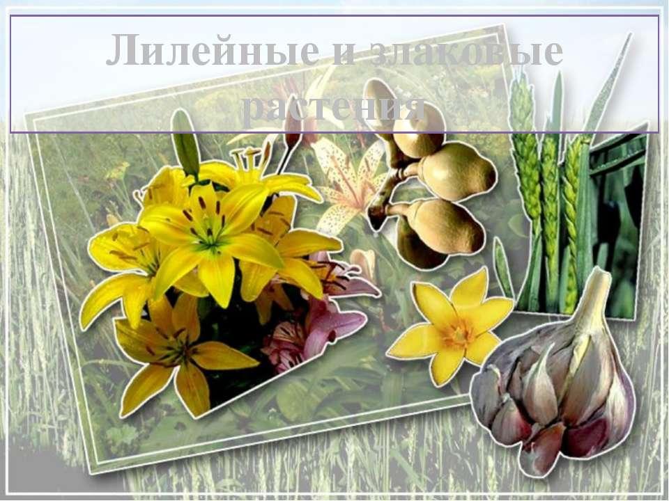 Лилейные и злаковые растения