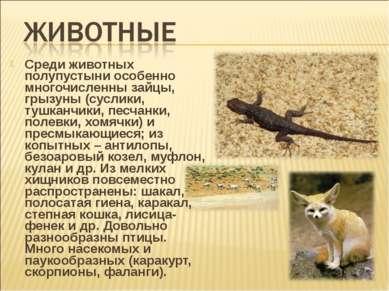 Среди животных полупустыни особенно многочисленны зайцы, грызуны (суслики, ту...