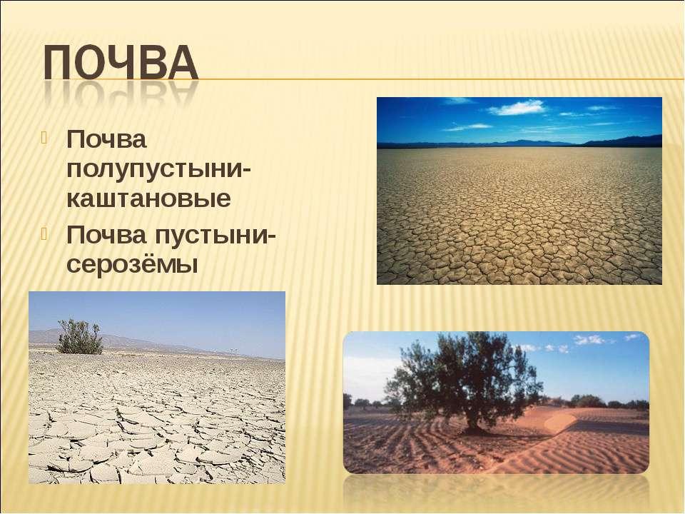 Почва полупустыни- каштановые Почва пустыни- серозёмы