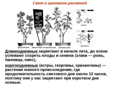 Свет и цветение растений Длиннодневные зацветают в начале лета, до осени успе...