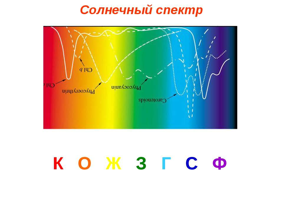 Солнечный спектр К О Ж З Г С Ф