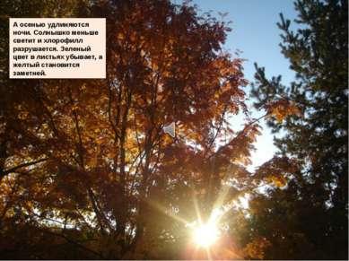 А осенью удлиняются ночи. Солнышко меньше светит и хлорофилл разрушается. Зел...