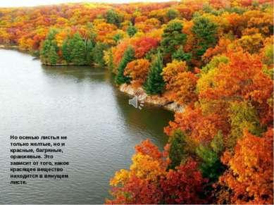 Но осенью листья не только желтые, но и красные, багряные, оранжевые. Это зав...