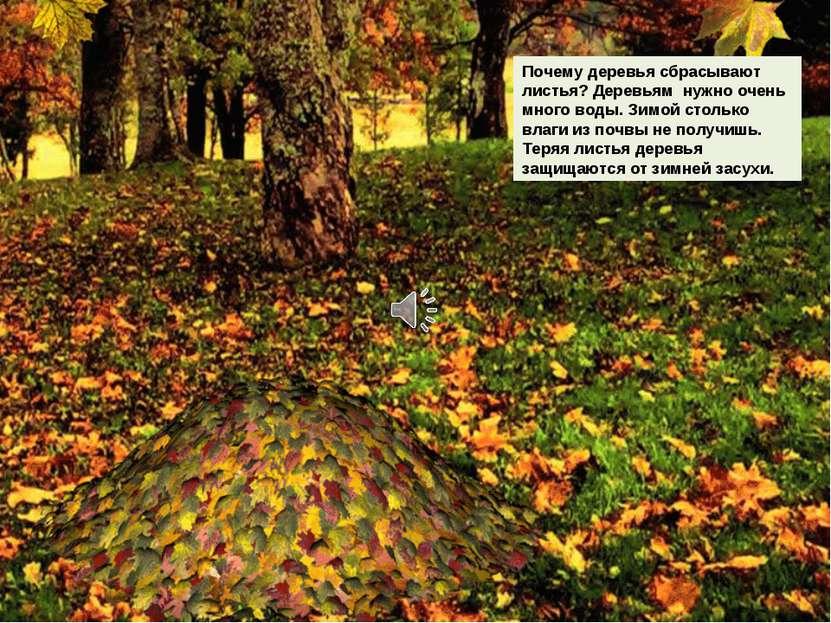 Почему деревья сбрасывают листья? Деревьям нужно очень много воды. Зимой стол...