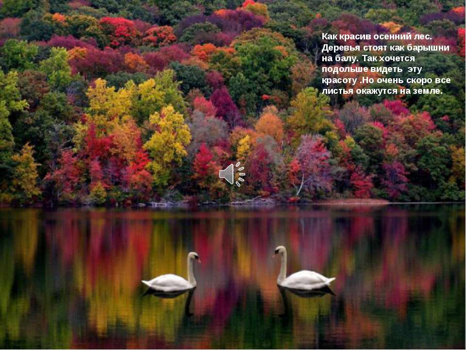 Как красив осенний лес. Деревья стоят как барышни на балу. Так хочется подоль...