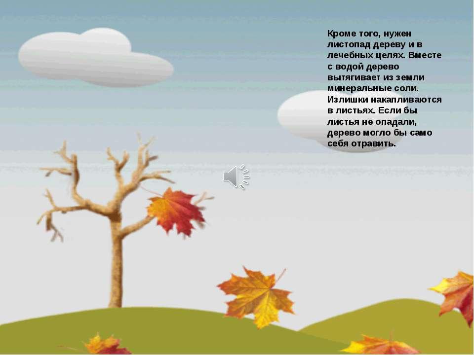 Кроме того, нужен листопад дереву и в лечебных целях. Вместе с водой дерево в...