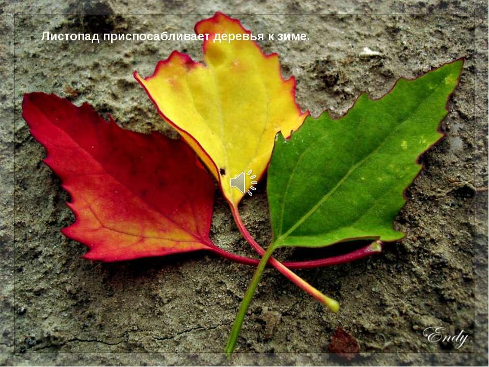 Листопад приспосабливает деревья к зиме.