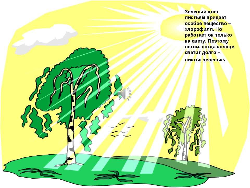 Зеленый цвет листьям придает особое вещество – хлорофилл. Но работает он толь...