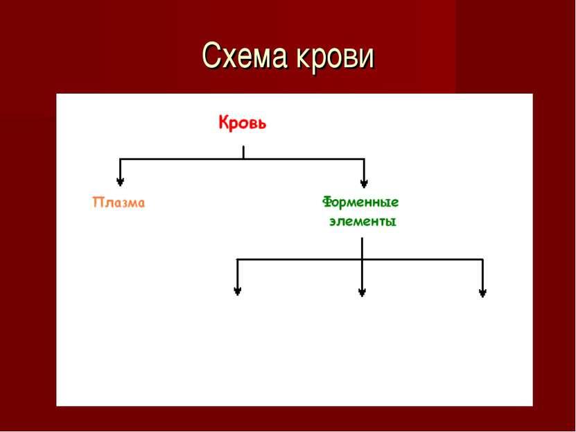 Схема крови