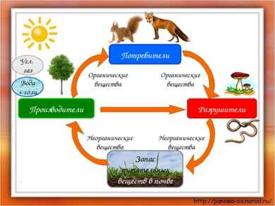 Производители Потребители Разрушители Запас питательных веществ в почве Угл. ...