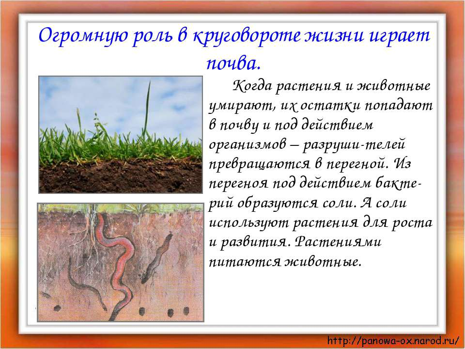 Огромную роль в круговороте жизни играет почва. Когда растения и животные уми...