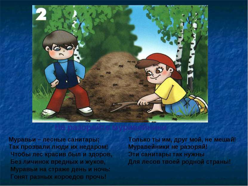 Не разоряйте муравейники Муравьи – лесные санитары; Так прозвали люди их неда...