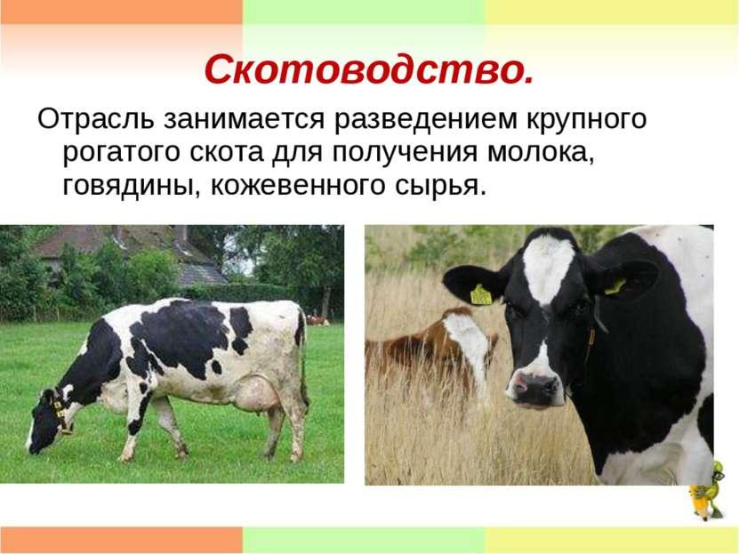 Скотоводство. Отрасль занимается разведением крупного рогатого скота для полу...