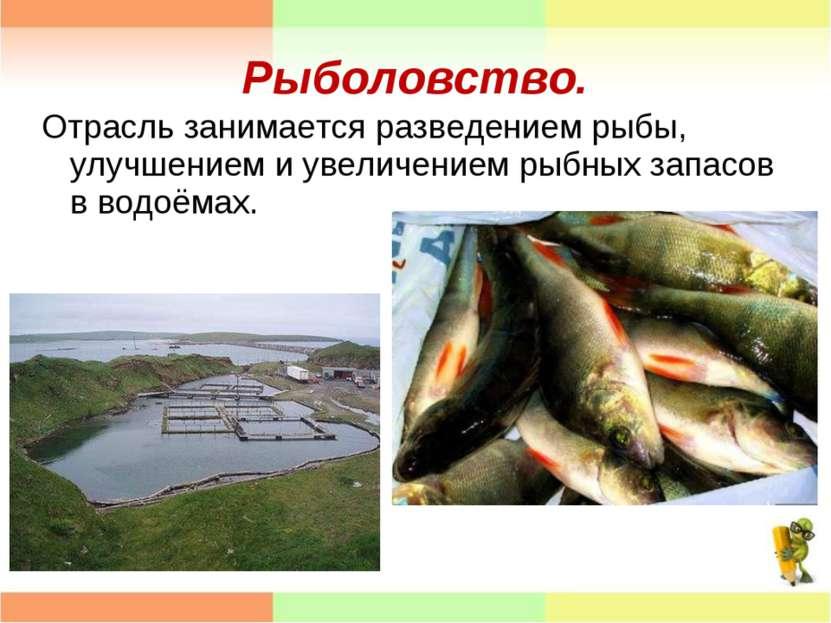Рыболовство. Отрасль занимается разведением рыбы, улучшением и увеличением ры...