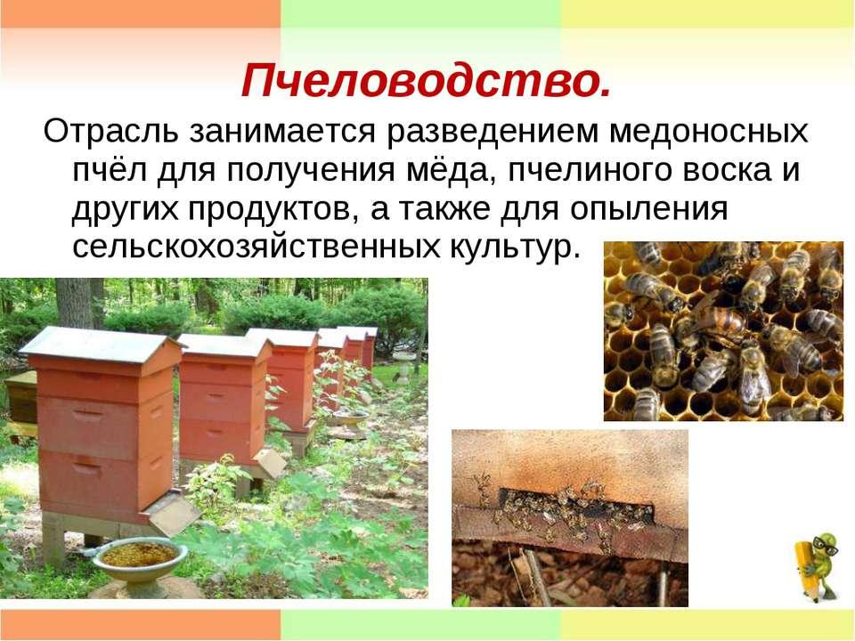 Пчеловодство. Отрасль занимается разведением медоносных пчёл для получения мё...