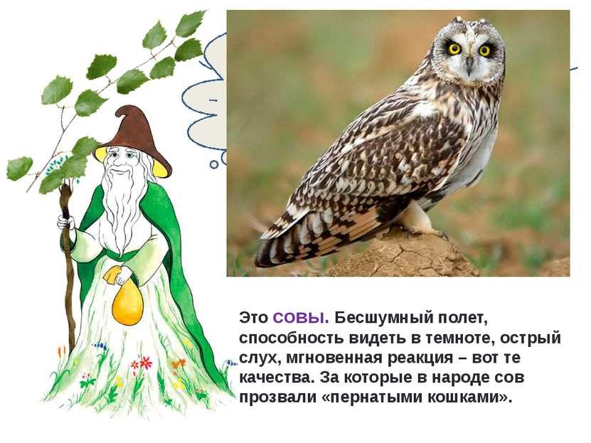 Каких птиц называют «пернатыми кошками»? Это совы. Бесшумный полет, способнос...