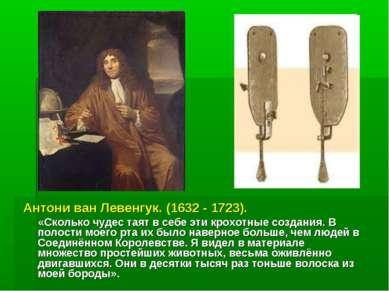 Антони ван Левенгук. (1632 - 1723). «Сколько чудес таят в себе эти крохотные ...