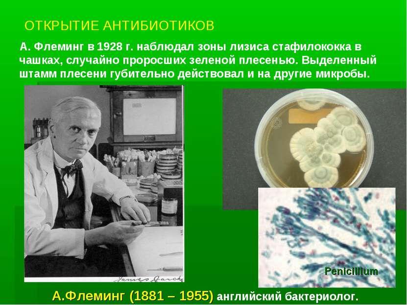 ОТКРЫТИЕ АНТИБИОТИКОВ А. Флеминг в 1928 г. наблюдал зоны лизиса стафилококка ...