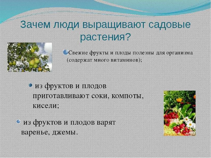 Зачем люди выращивают садовые растения? Свежие фрукты и плоды полезны для орг...