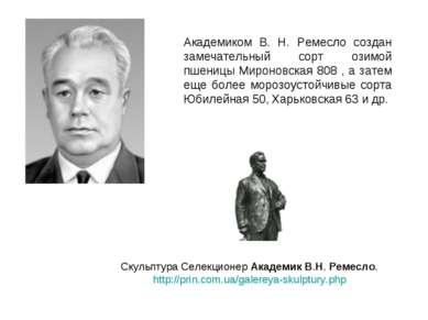 Академиком В. Н. Ремесло создан замечательный сорт озимой пшеницы Мироновская...